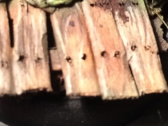 Close up of the wood grain
